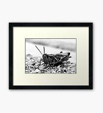 Hopper. Framed Print