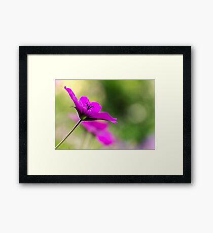 Purple sunlight Framed Print