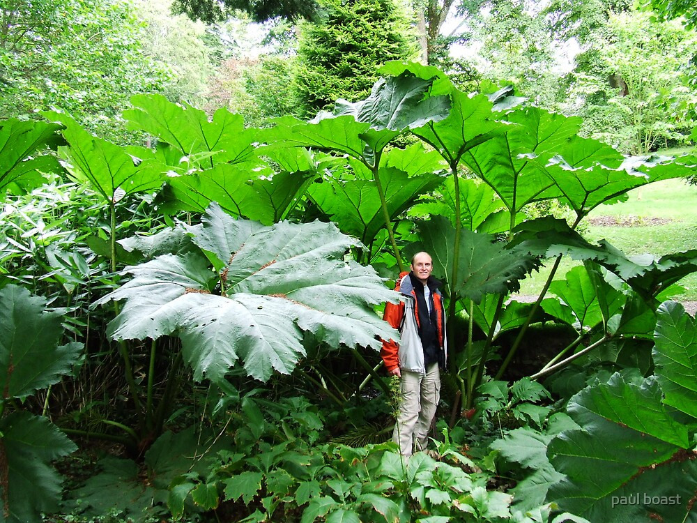Day of the ......Triffids ? by paul boast