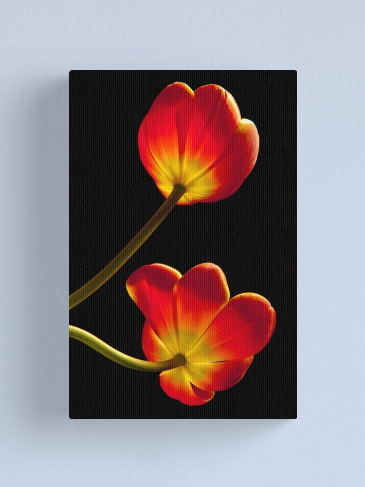 Alternate view of Tulips Glow Canvas Print