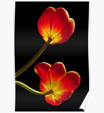 Tulips Glow Poster