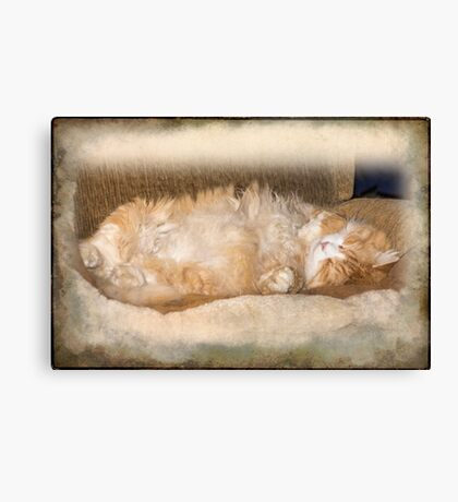 BobCat Asleep Canvas Print