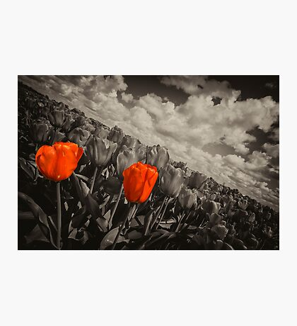Red 2 Tilt  Photographic Print
