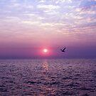 Morning Flight by Suni Pruett