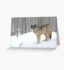 A lone wolf Greeting Card