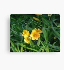 Yellow Fresias - Oil Painting Canvas Print