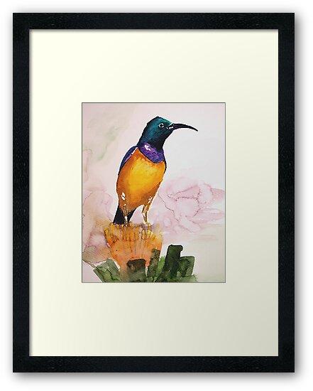 Orange-breasted Sunbird (Nectarinia violacea) by Claudia Dingle