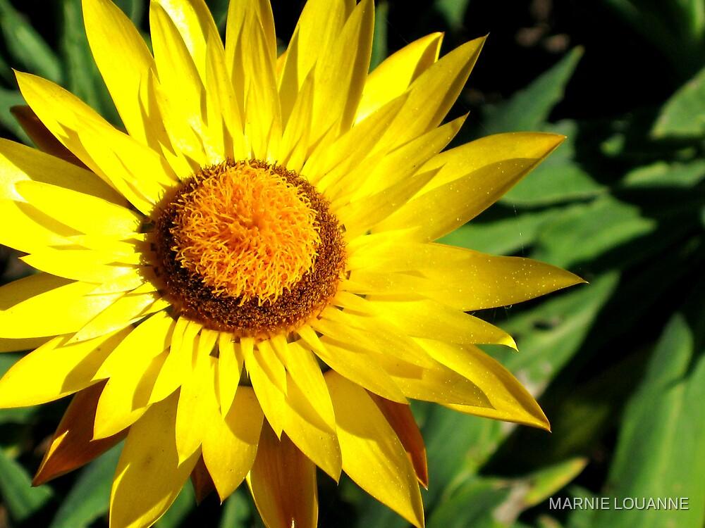 Sunshine II by MARNIE LOUANNE