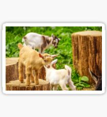 Baby Goats Playing Sticker