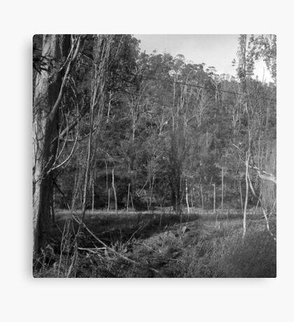 Old Hops Field, Tasmania Metal Print