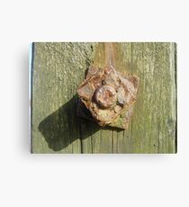 Rusty nuts Canvas Print