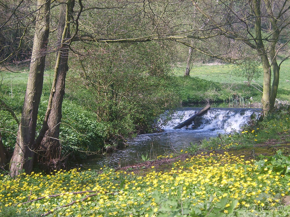 Springtime stream by Tanya Housham