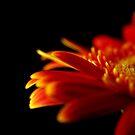 Crizanteme by Victor Bezrukov
