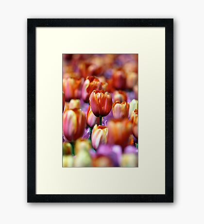 Standing Out In A Crowd Framed Print