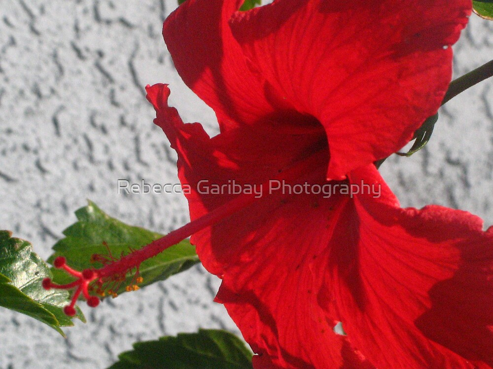 RED  by Rebecca Garibay Photography