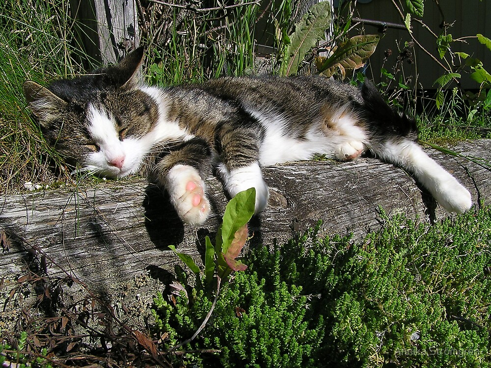 Life is good when you´re a cat..... by Annika Strömgren