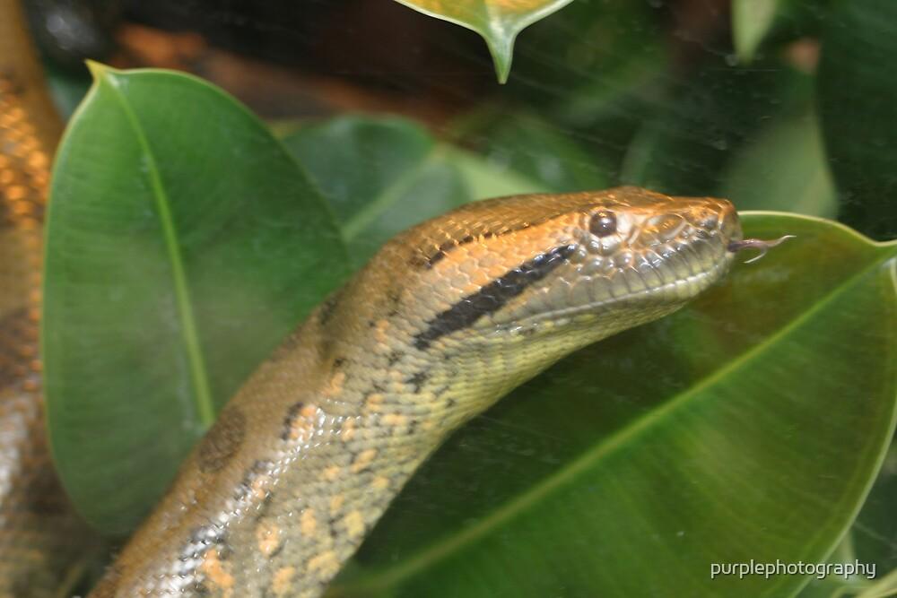 Snake by purplephotography