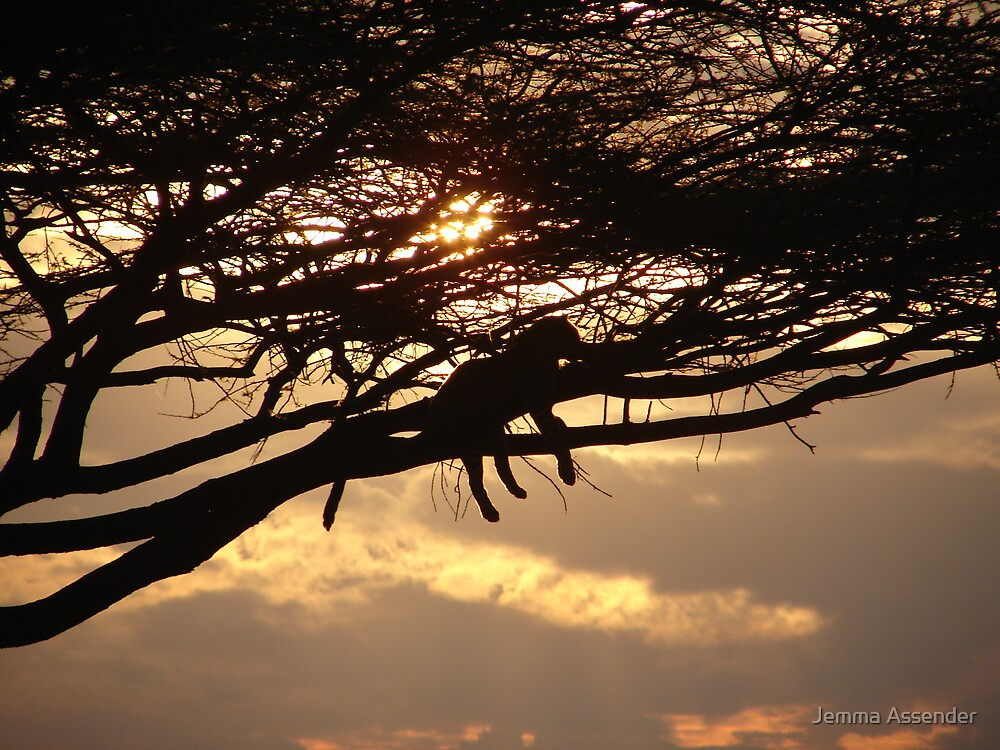 Leopard At Sunset by Jemma Assender