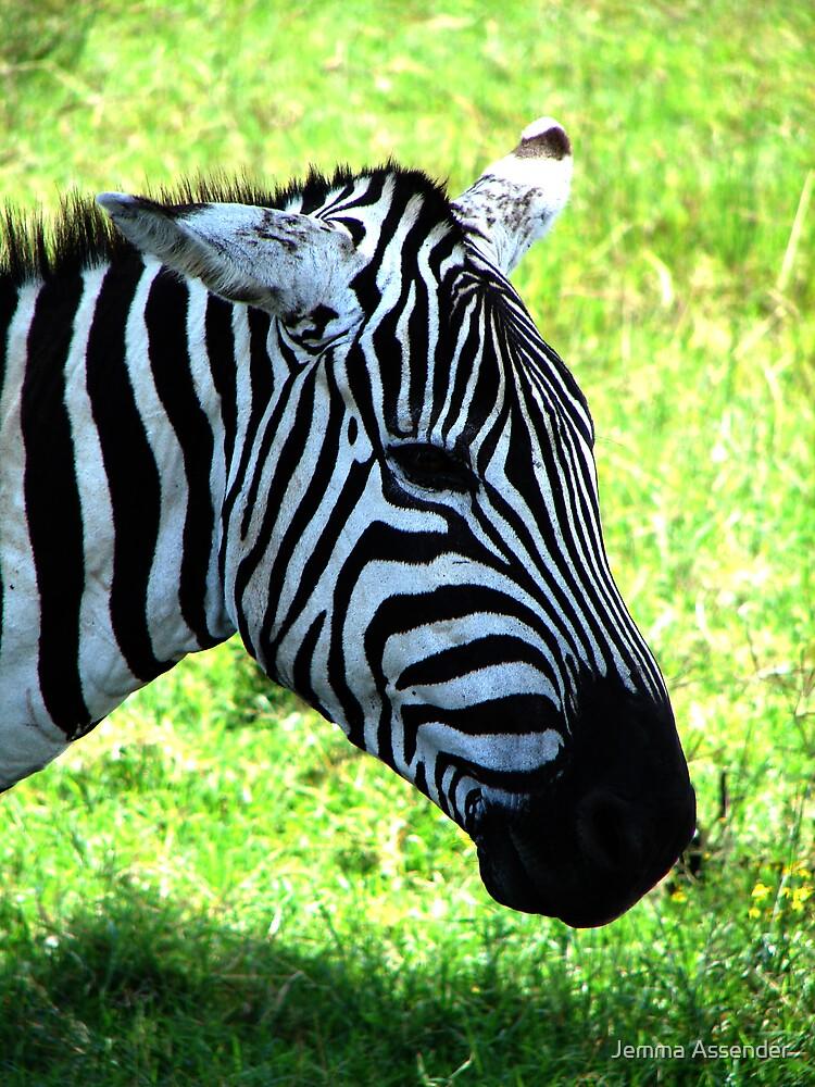 Zebra at Lake Nakuru by Jemma Assender