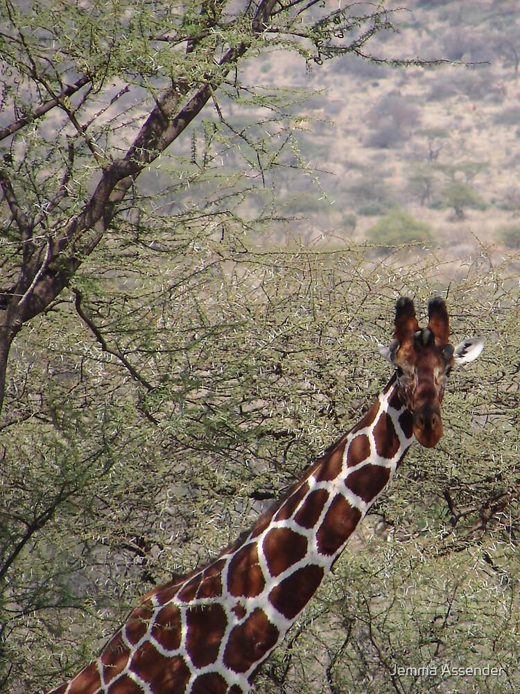 Inquisitive Giraffe  by Jemma Assender