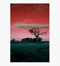 Rihanna Tree, Really Wild! Photographic Print