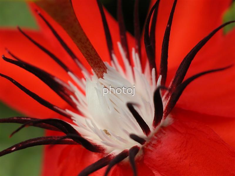 photoj  Macro Flowers by photoj