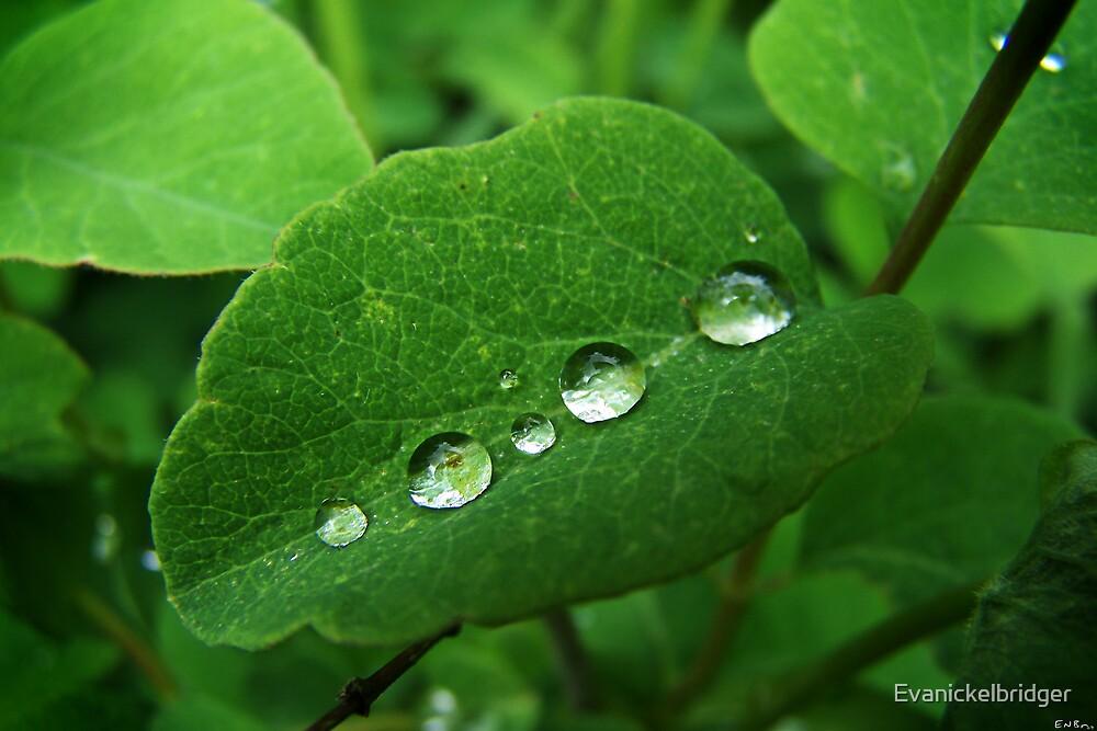 Dew on a Leaf by Evanickelbridger