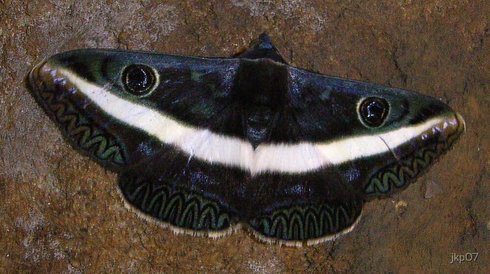 Forest Moth by jkp07