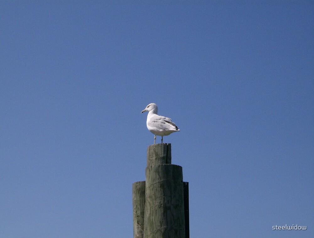 Seagull by steelwidow