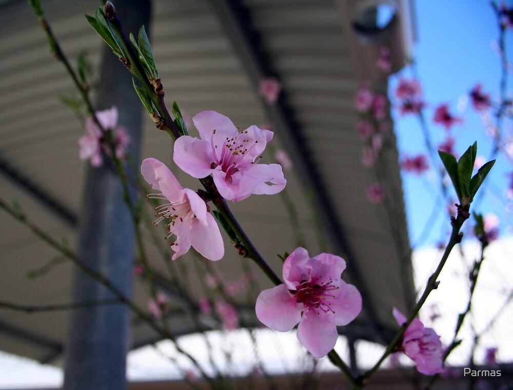 Flowers by Parmas
