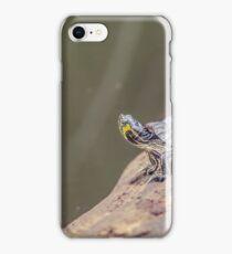Dutch Turtle iPhone Case/Skin