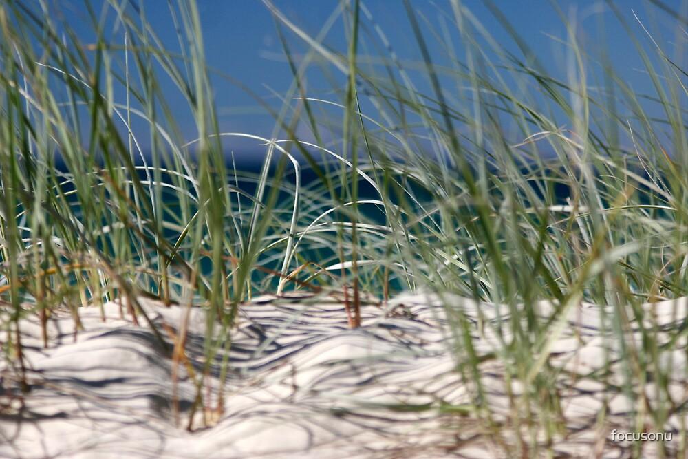 beach grasses by focusonu