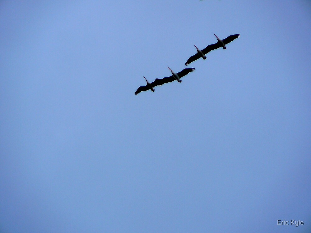 PRECISION FLYING OVERHEAD. by Eric Kyle