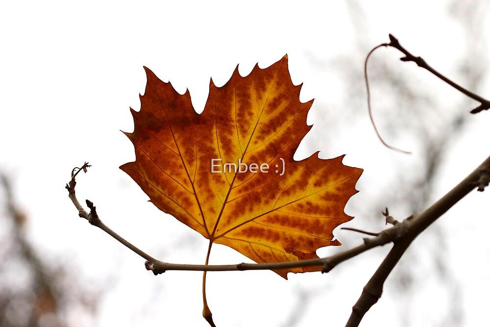 Fall by momleeb