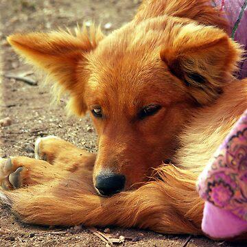A dogs life (gotta love it) by wondawe