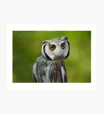Northern white-faced owl - Ptilopsis leucotis Art Print