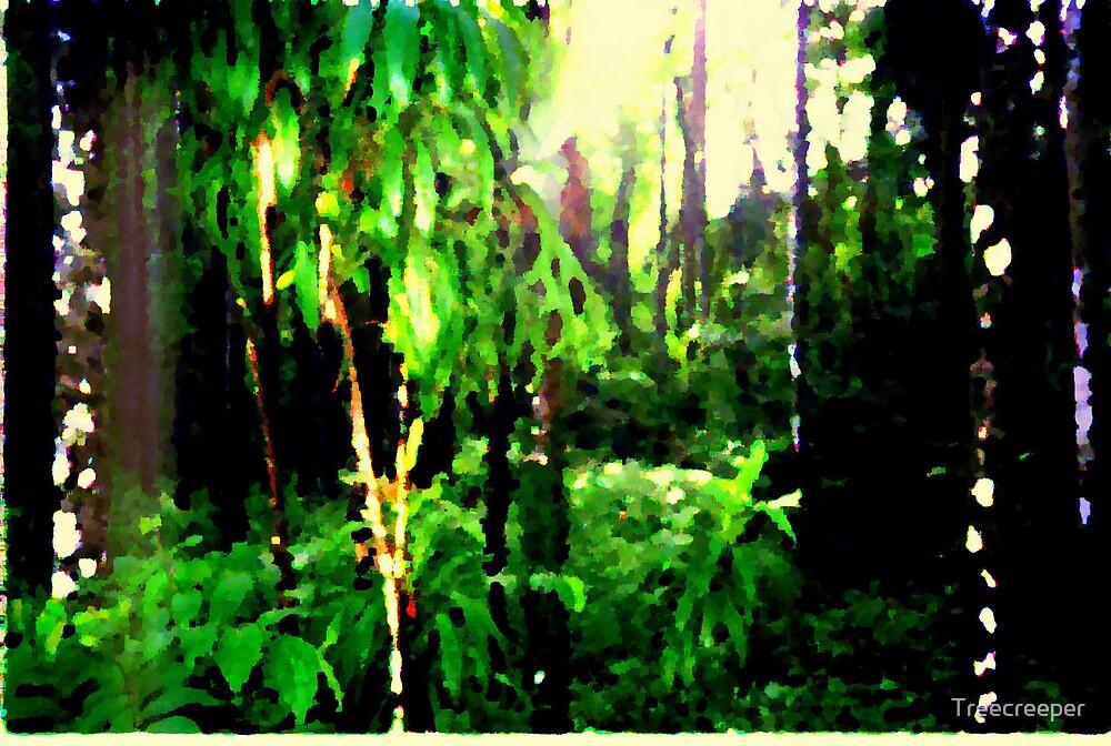 Rainforest by Treecreeper
