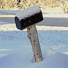 Rustic Mail by Martha Medford