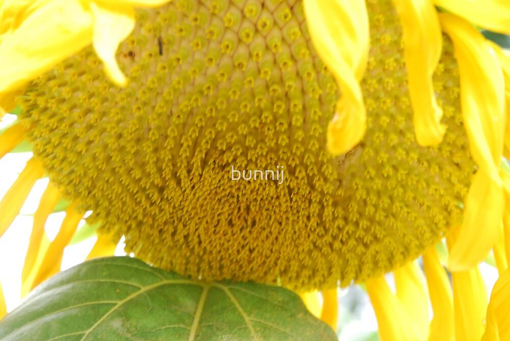 Sunflower Yellow by bunnij