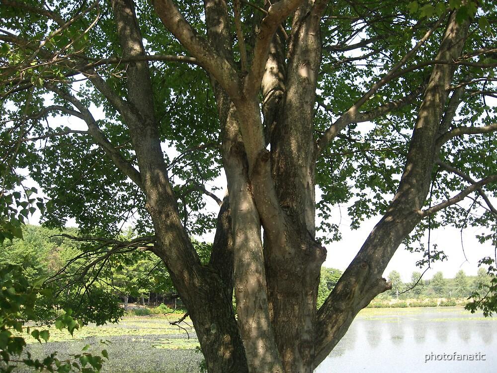 tree by photofanatic