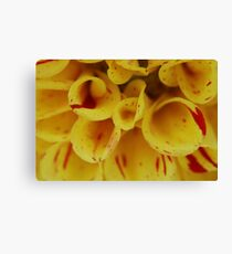 Yellow Macro Canvas Print