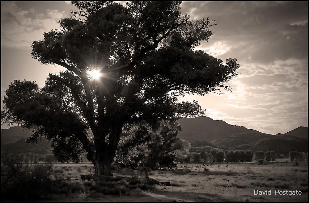 Night falls by David  Postgate