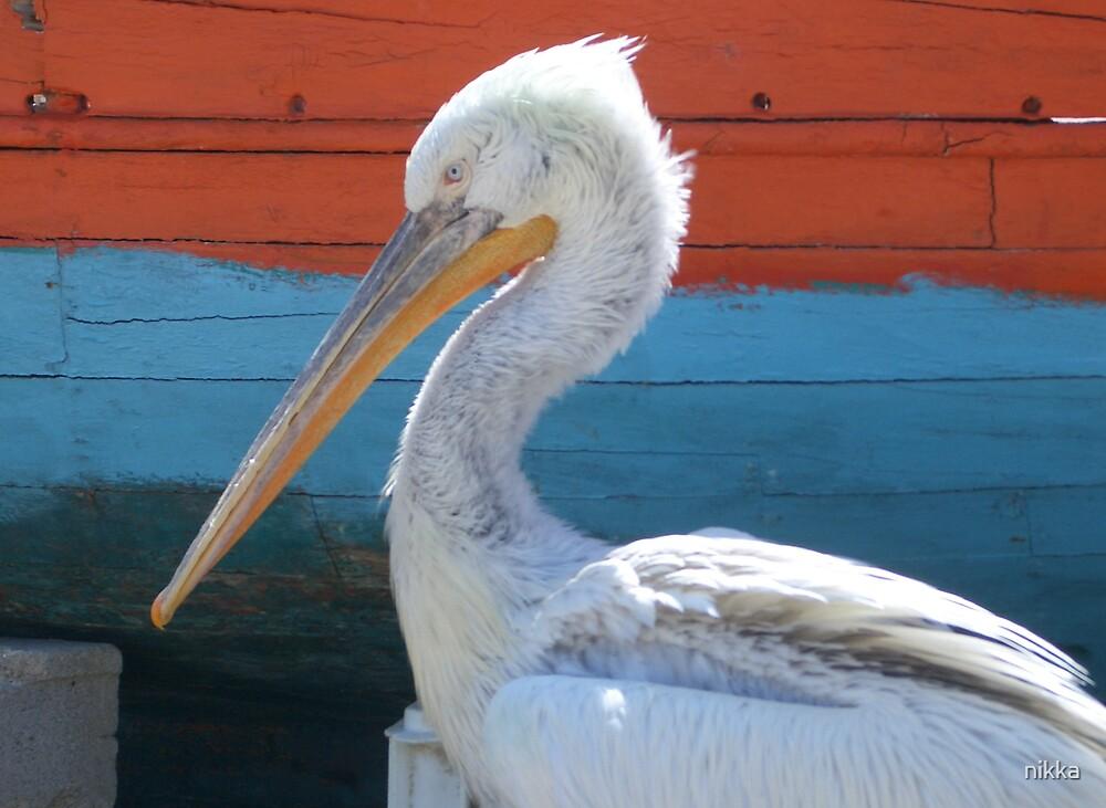 blue eyed pelican by nikka