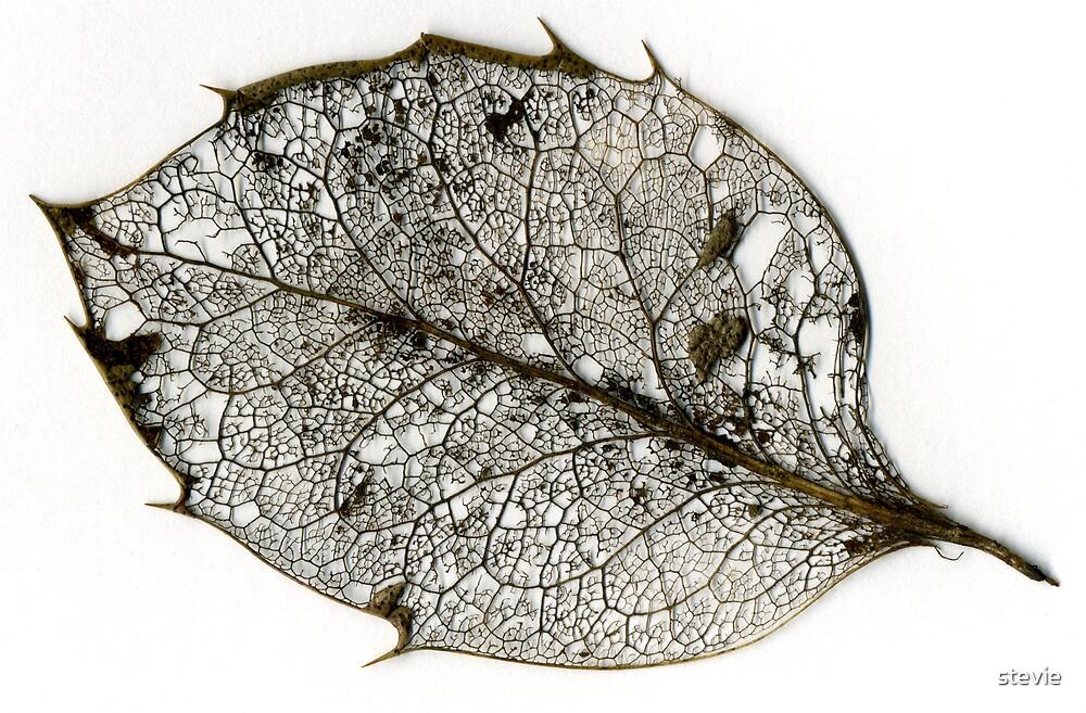 Skeletal Leaf by stevie