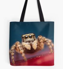 Pseudeuophrys erratica female jumping spider photo Tote Bag