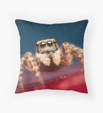 Pseudeuophrys erratica female jumping spider photo Throw Pillow