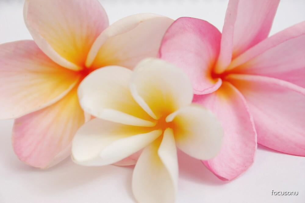 frangipani salad by focusonu