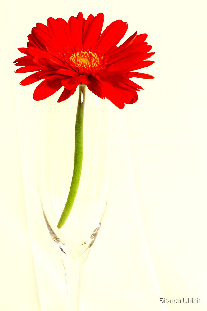 A Glass of Daisy by Sharon Ulrich