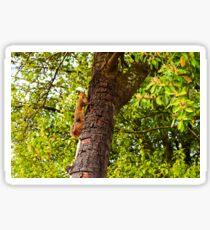 Squirrel Friend Sticker