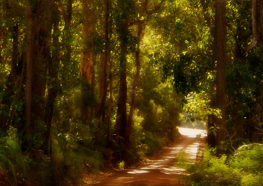 Country road by alistair mcbride
